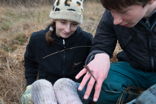 Een hagedis is interessant